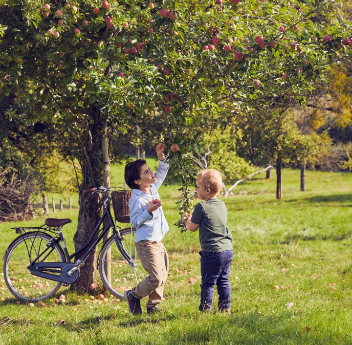 Toddlers picking apples